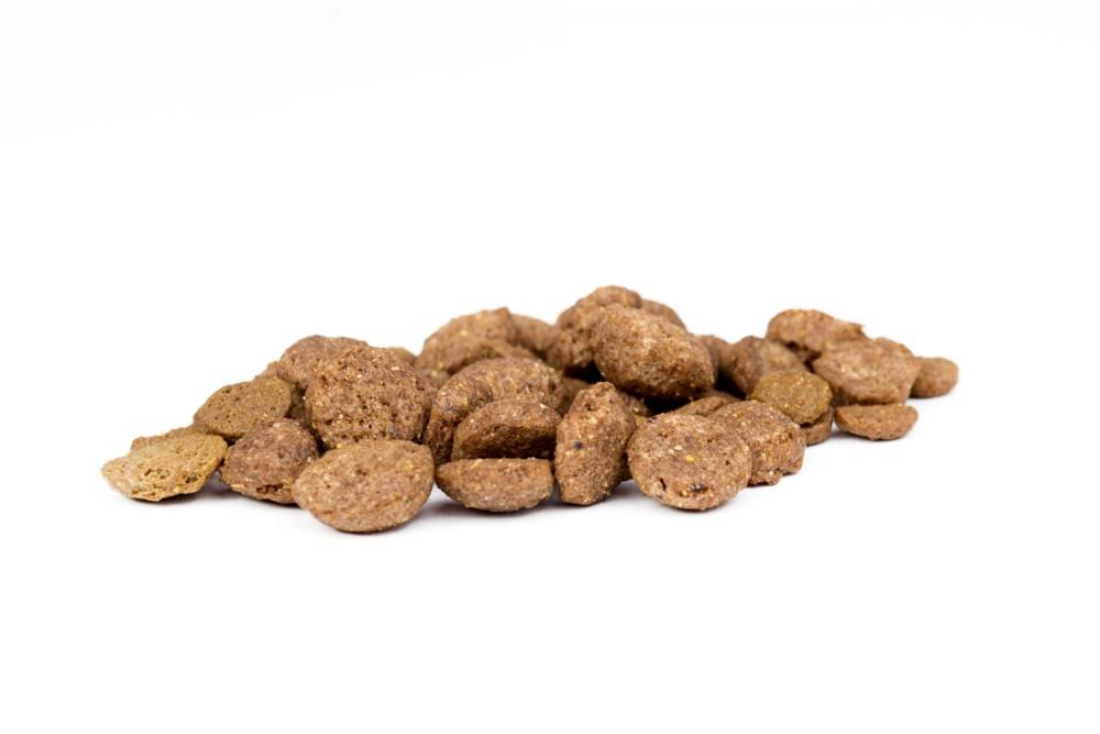 غذای مهربانی سگ